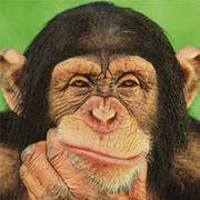Are u smarter than a chimp?